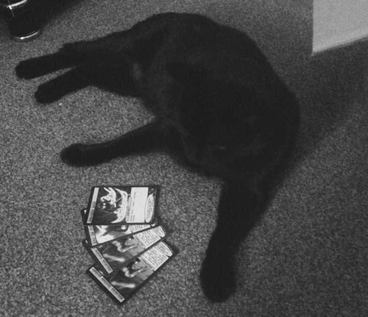 Cat sat in front of 4 SOTM cards